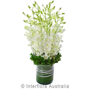 white orchids..$75